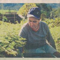 thumb_jornal_commercio