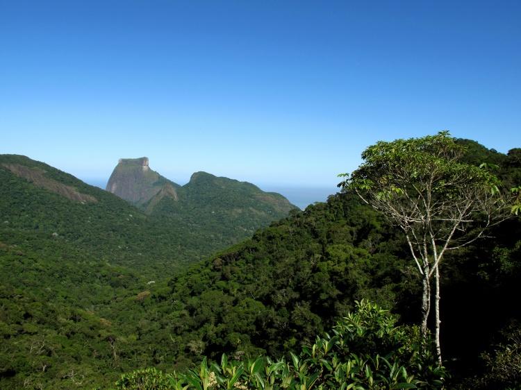 Floresta da Tijuca. Foto (WikiRio / Andre Sampaio)