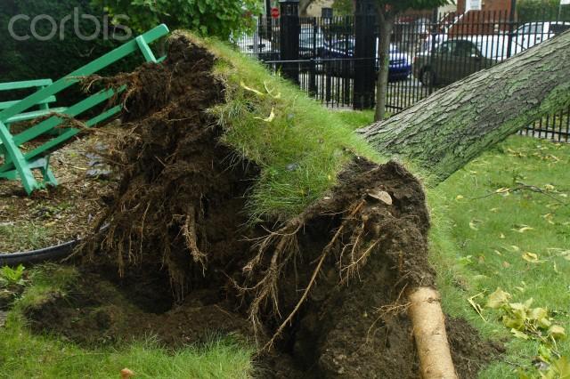 Como podar árvores no Rio de Janeiro. Poda de árvore em propriedade particular, poda de árvore em área pública