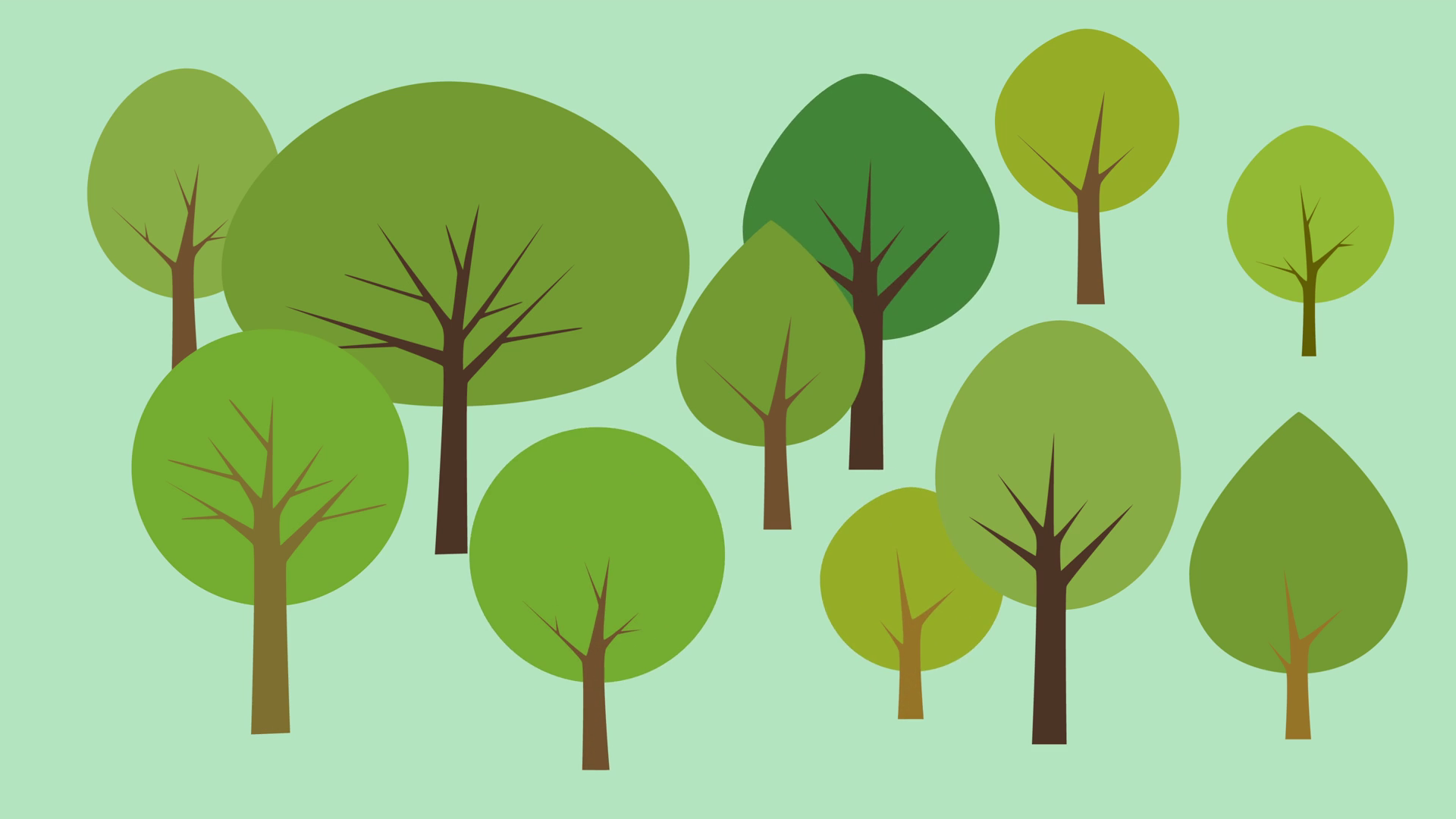 árvores podem guardar curiosidades sobre o lugar que habitam. Confira