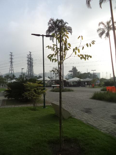 árvore plantada pela Biovert