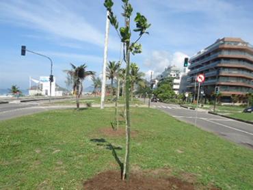 arborizacao2