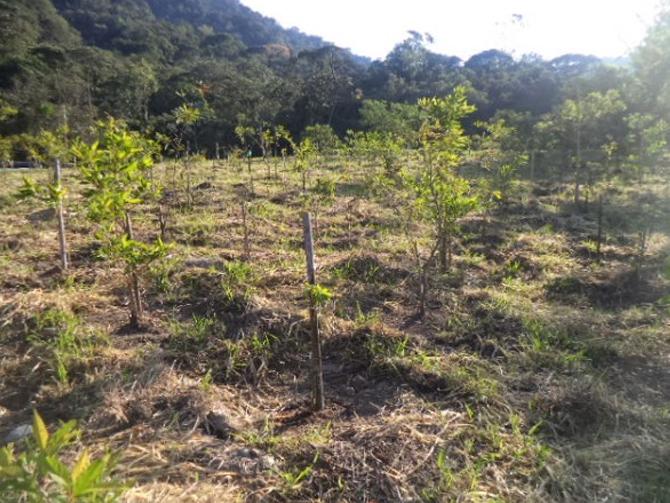 servicos-reflorestamento
