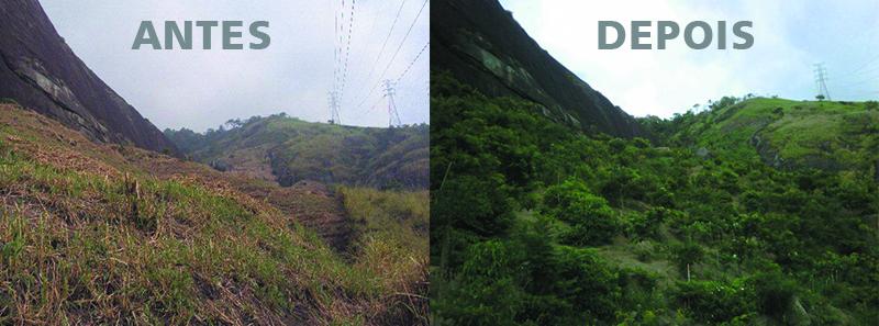 Resultado de imagem para area reflorestada antes e depois