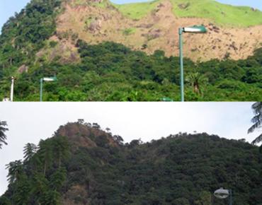 Antes e Depois de Projeto de Recuperação Florestal realizado pela Biovert no Morro do Pica-Pau, no Itanhangá.  Resultados que se perpetuam ao longo do tempo.
