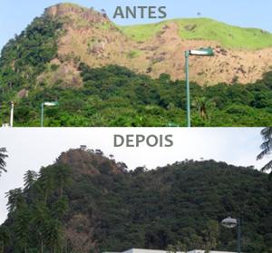 Antes e Depois de reflorestamento realizado pela Biovert no Morro do Pica-Pau, no Itanhangá, RJ. Foto de cima (2005) foto de baixo (2015).