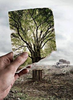 deforestation picture Pinterest.com