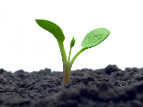 plantar no inverno é bom?