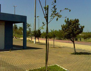 CidadeDasCriancas2_PlantioBiovert-600x800