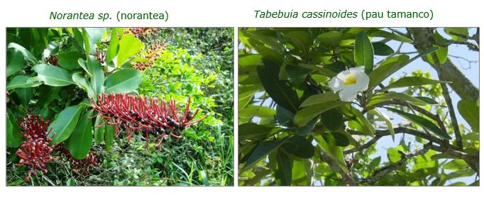 Algumas espécies nativas em extinção que foram plantadas no local durante o processo de recuperação ambiental.