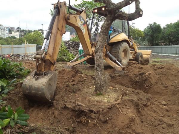 Remoção de Árvores acarreta o cumprimento de Medida Compensatória com plantio de novos indivíduos arbóreos.