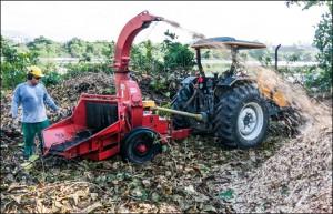Trituração da biomassa proveniente das remoções de espécies exóticas durante o PRAD.
