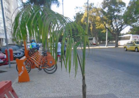 Palmeira imperial_Biovert3