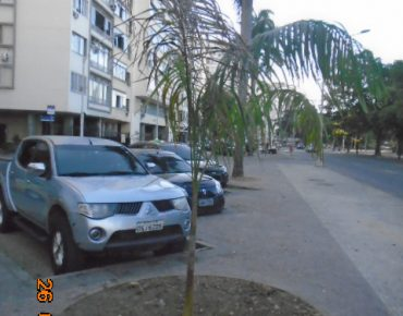 Palmeira imperial_Biovert4
