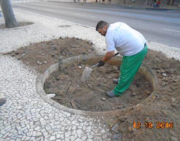 Transplante Palmeiras Presidente Antonio Carlos 2