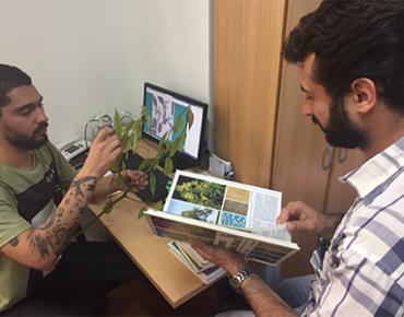 Procedimento de identificação de uma espécie - engenheiros florestais coletam folhas, inflorescências e/ou frutos para auxiliar na identificação de espécies mais incomuns.