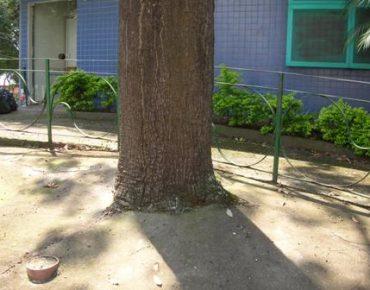 Árvore cimentada. (foto: Época - Blog do Planeta)