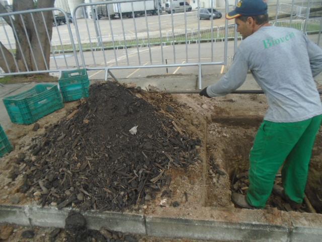Arborização Engenhão 2 - Biovert