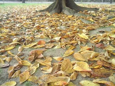 Folhas caem em determinada época do ano e causam entupimento de boeiros.