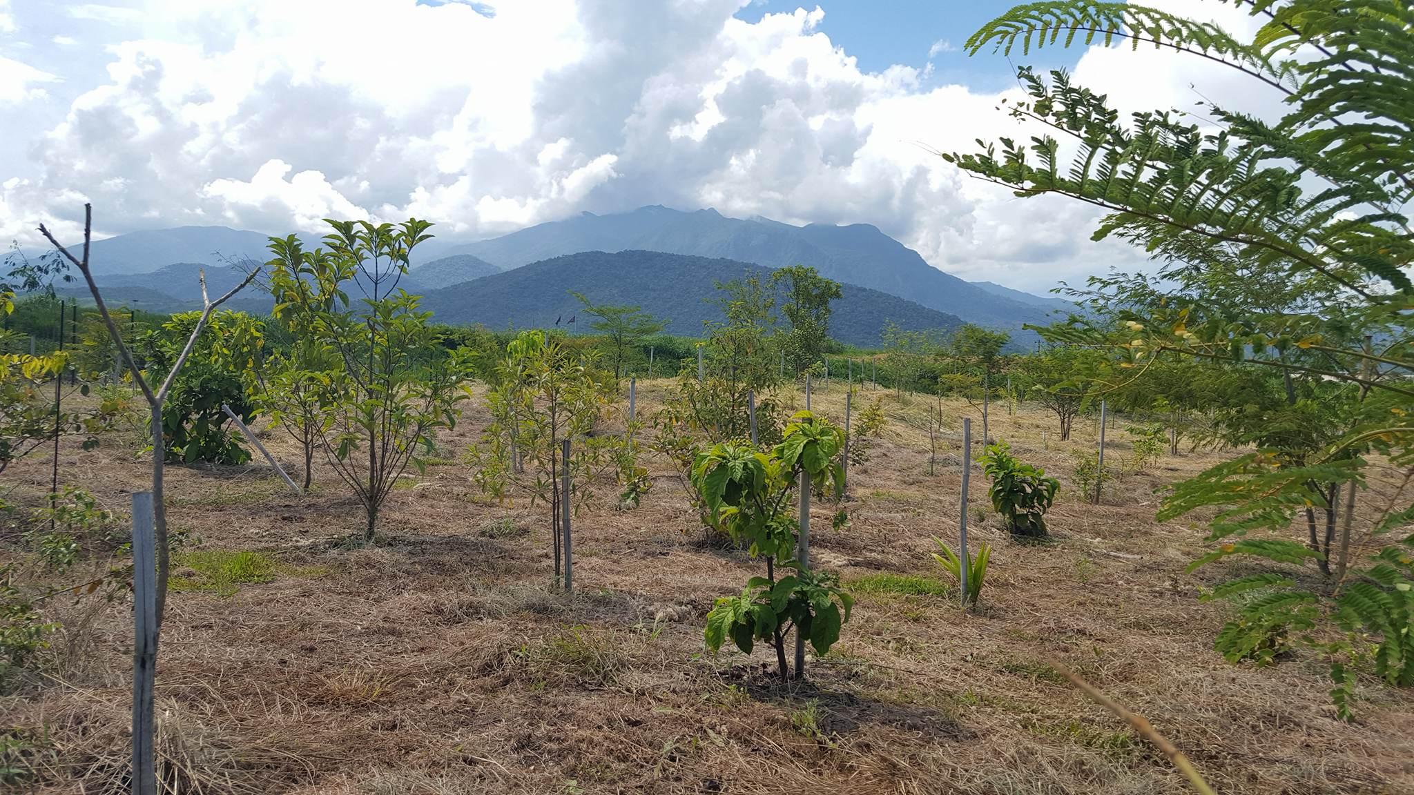 PRAD em área de preservação permanente (APP), em Itatiaia RJ ae7a0c2a18