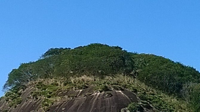 Depois da implantação, detalhe do topo da pedra mostra com maior riqueza a vegetação desenvolvida.