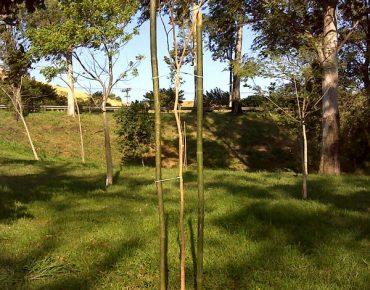Mudas nativas plantadas no Viaduto Oscar Freire, em Campo Grande, pela Biovert. Projeto foi resultado de um plantio de Habite-se