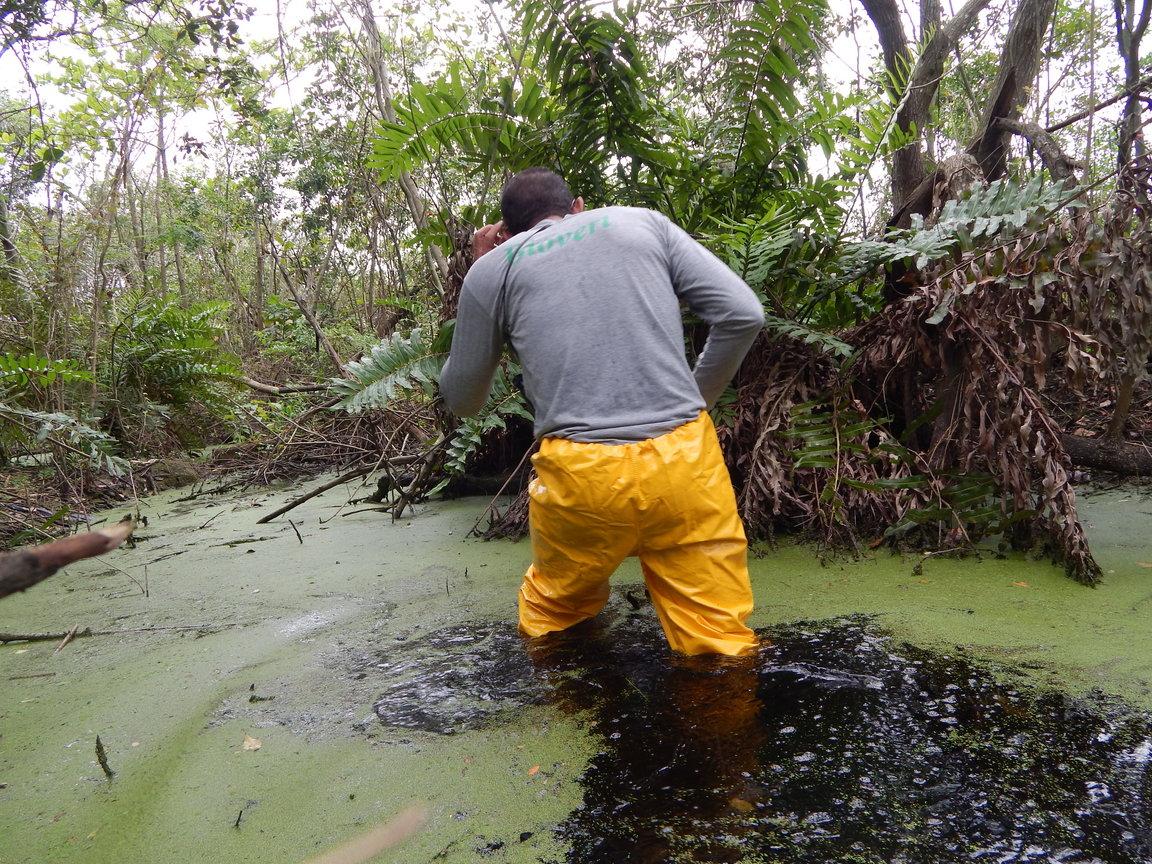 Biólogo utilizando EPI vistoria a área alagada em busca de espécies de fauna silvestre